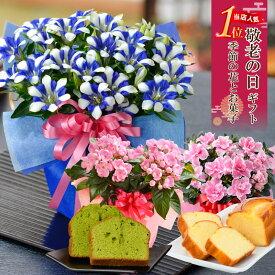 敬老の日 ギフト 選べる季節の鉢花 リンドウ白寿 におい桜 アザレア や花とスイーツのセットも選べる敬老の日のプレゼント