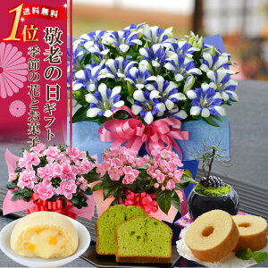 【敬老の日 ギフト プレゼント】 選べる季節の鉢花リン...