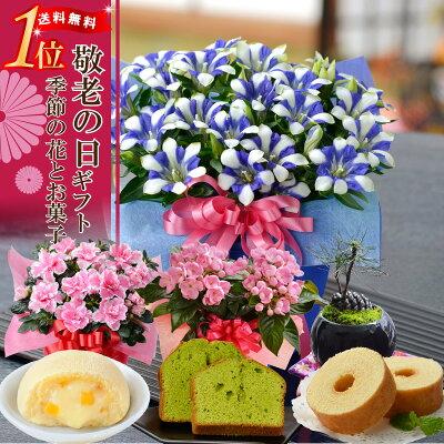敬老の日ギフト選べる季節の鉢花