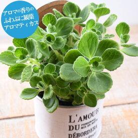 育てる芳香剤 アロマティカス 3号ポット 観葉植物 おしゃれ 苗