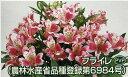 09kyu yamato0084