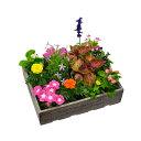 花苗 お花の玉手箱 1セット12ポット入り 2セット注文で 送料無料 ★園芸専門店が選ぶ 季節のお花の苗! 花壇 や 寄せ…