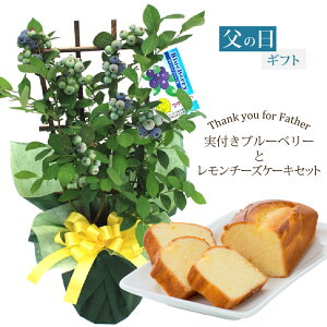 2020 父の日 ギフト プレゼント 植物 花 実付きブルーベリー鉢植えとレモンチーズケーキセット