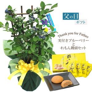 2020 父の日 ギフト プレゼント 植物 花 実付きブルーベリー鉢植えとれもん饅頭セット