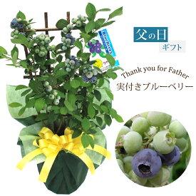 父の日 プレゼント 植物 花 実付きブルーベリー鉢植えギフト 果樹苗 果物 家庭菜園 ギフト 2021
