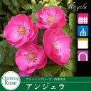 Rose sato01 1