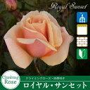 Rose09satou 64 2