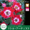 Rose09satou-71-2