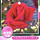 Rose09satou-16-2