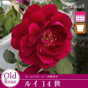 Rose09satou-77-2