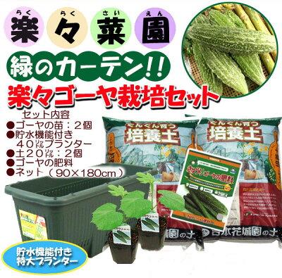 4月にお届け予約品●野菜トマト苗3号ポット【接木苗イエローミミ】