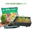 かんたん田んぼセット(半タル鉢1、稲苗1、土10L)! お米作り栽培セット