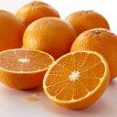 清見タンゴール(清見オレンジ)家庭用約9kg