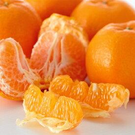 ワケありポンカンオレンジ約5kg