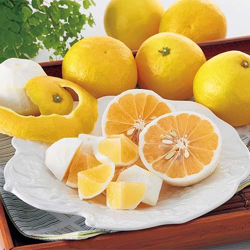 ニューサマーオレンジ(日向夏・小夏みかん)家庭用約2kg