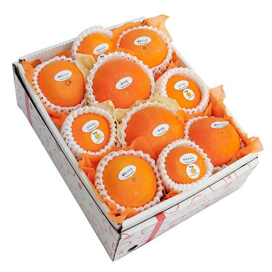季節のフルーツ詰合せセット4,500円