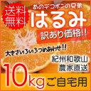 【送料無料】お試し!紀州和歌山 児玉農園のはるみ 家庭用約10kg【はるみ/みかん/訳あり/ワケあり/わけあり/家庭用】