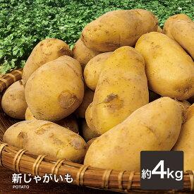 【あす楽対応】新じゃがいも 4kg 新ジャガイモ じゃがいも メークイン 長崎産 野菜 ジャガイモ 新じゃが