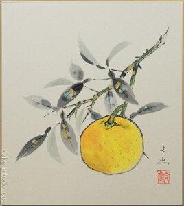 高級色紙「柚子」文魚(色紙絵)送料無料