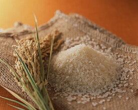送料無料 新潟県産コシヒカリ 5kg 新米+ 1kg= 6kg 10%増量 と昔の農法で作った米 5kg 新米= 11kgセット 令和2年産
