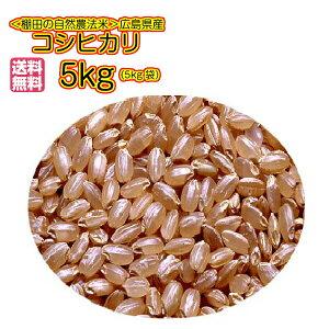 送料無料広島県産コシヒカリ 5kg 玄米 プレミアム赤袋 令和 3年産 新米 1等米