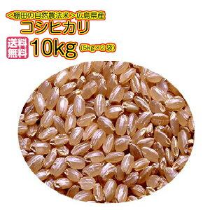 送料無料 広島県産コシヒカリ 10kg 玄米 新米 5kg×2袋 ゴールド袋 令和2年産1等米