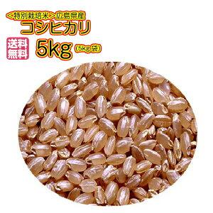 送料無料 広島県産コシヒカリ 5kg 玄米 新米 特別栽培米 秘蔵米ゴールド袋令和2年産 1等米
