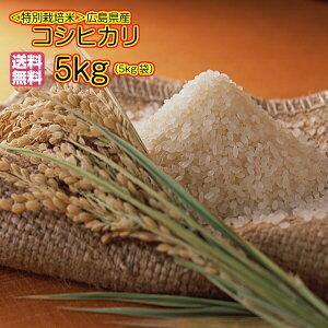 送料無料 広島県産コシヒカリ 5kg 玄米 特別栽培米 ゴールド袋令和元年産1等米