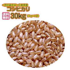 送料無料 広島県産コシヒカリ 30kg 玄米 特別栽培米 30kg 5kg×6金袋 秘蔵米2年1等米