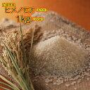 もち米 1kg 広島県産ヒメノモチ 1kg 新米 モチ米 1kg 餅米 1kg