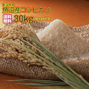 送料無料 魚沼産コシヒカリ 30kg 5kg×6袋新潟県産コシヒカリ 令和2年産 1等米