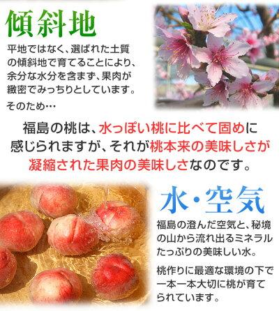 福島の桃・特秀品