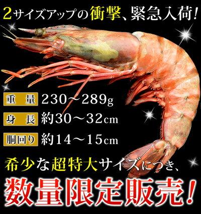 皇帝の海老ブランド・天然シータイガー(超特大サイズ・1尾)