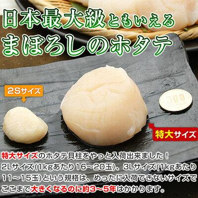 日本最大級ともいえる、まぼろしのホタテ