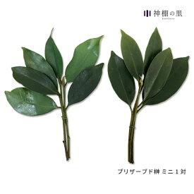 プリザーブド榊 ミニ 1対での販売です。榊造花とは違います!