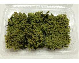スナゴケ Lサイズ テラリウム コケリウム 苔テラリウム アクアリウム 観葉植物 園芸 植木鉢 苔盆栽 苔好き コケインテリア 苔 コケ
