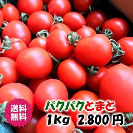 【送料込み】パクパクとまと 1kg 2,800円 ミニトマト!高糖度! うす皮! 産地直送!