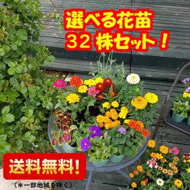 【メイン選べる】 おまかせ花苗32株セットガーデニング おまけの肥料付