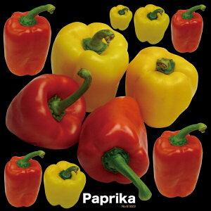 シール 野菜 パプリカ 写真 装飾 デコレーションシール チョークアート 窓ガラス 黒板 看板 POP ステッカー (最低購入数量3枚〜)