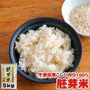 令和元年産 千葉県産 こしひかり 胚芽米 5kg 送料無料の地域もございます! お米 ギフト