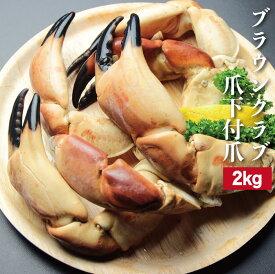 ブラウンクラブ爪下付爪 超特大 総重量2kg / かに カニ 蟹 ボイル ヨーロッパ ボイル お中元 敬老の日