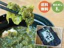【初めてのお客様限定】熊本県産 あおさのり 8g 300円おためしパック【送料無料】