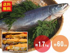 【送料無料】新巻鮭 約1.7kg 約60cm(冷凍)さけ しゃけ サケ 鮭 シャケ 魚 送料無料 冷凍 おかず 弁当 ギフト 節分 お取り寄せグルメ お取り寄せ 取り寄せ お取り寄せギフト塩鮭 姿 秋鮭 北海