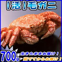 活 毛ガニ 1尾約700gカニ/かに/蟹/毛がに/正規品/北海道産/稚内