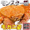 【送料無料】ボイル冷凍 毛ガニ 1.1kg北海道産の超大型毛ガニ!!毛蟹 毛がに 御中元 御祝 ギフト プレゼント