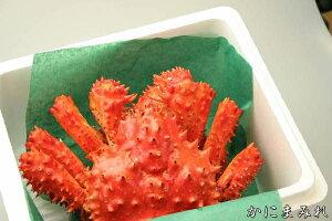 花咲ガニ特大オス入荷!【濃厚な蟹身】浜茹でハナサキ今年は希少な限定サイズ1.2kg前後