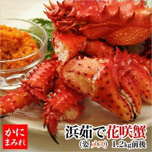 北海道の花咲カニ 訳なし子持ちメス 内子と外子がおいしい 花咲蟹(子付きメス1.2kg前後)