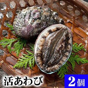 北海道 活蝦夷鮑 2個入りで合計200g前後 えぞアワビが活きたままで届きます。活あわびだからこそお刺身、肝醤油、肝刺し、水貝、煮物、鉄板であわびステーキで食べられます。北海道グ