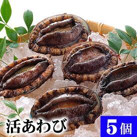 北海道産 活蝦夷鮑 5個入りで合計500g前後 エゾアワビが活きたままで届きます。活あわびだからこそお刺身、肝醤油、肝刺し、水貝、煮物、鉄板であわびステーキで食べられます。北海道グルメ食品 魚介類・シーフード 貝 アワビ