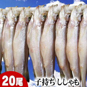 子持ちシシャモ メス 20尾入り(大サイズ) 北海道鵡川・広尾・厚賀・釧路産ししゃもです。脂のりも良く、ご飯のおかずに最適な干物柳葉魚、干し魚。ぷちぷち卵。北海道グルメ食品 魚